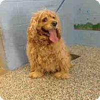 Adopt A Pet :: URGENT ON 9/28  San Bernardino - San Bernardino, CA