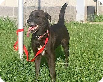 Labrador Retriever Mix Dog for adoption in Beacon, New York - Lilly