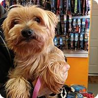 Adopt A Pet :: Collin - Toronto, ON