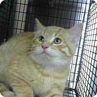 Adopt A Pet :: URGENT on 10/30 at DEVORE - San Bernardino, CA