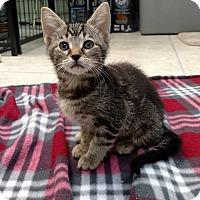 Adopt A Pet :: Rema - Austintown, OH