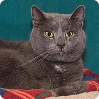 Adopt A Pet :: Napoleon - Elmwood Park, NJ