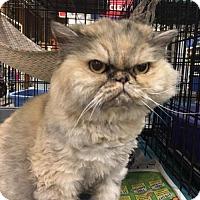Adopt A Pet :: Moka - Boynton Beach, FL