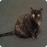 Adopt A Pet :: Punkinn - Harrisburg, NC