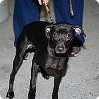 Adopt A Pet :: Newton - Minneapolis, MN