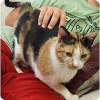 Adopt A Pet :: Mama Girl - Lake Charles, LA