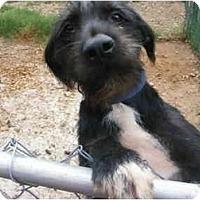 Adopt A Pet :: Darwin - E Windsor, CT