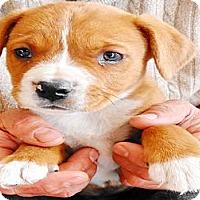 Adopt A Pet :: Diego - San Diego, CA
