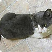 Adopt A Pet :: BeBe - Mobile, AL
