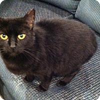 Adopt A Pet :: Betty - Corbin, VA