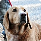 Adopt A Pet :: Jackie Daniels~B  wonders why she is not adopted?