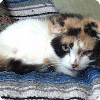 Adopt A Pet :: Snickerdoodlle - Kansas City, MO