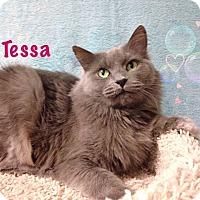 Adopt A Pet :: Tessa - Foothill Ranch, CA