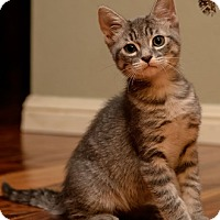 Adopt A Pet :: ScoutS - North Highlands, CA