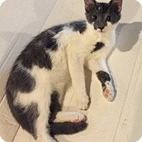 Adopt A Pet :: Mickey - Morganton, NC