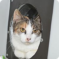 Adopt A Pet :: Allison - Lincoln, NE
