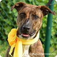 Adopt A Pet :: Missy - Miami, FL
