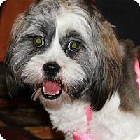 Adopt A Pet :: Astrid - Springfield, VA