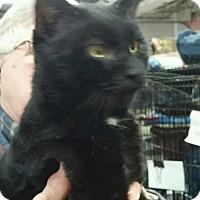 Adopt A Pet :: Click - Trevose, PA