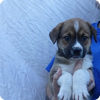Adopt A Pet :: Jem - Oviedo, FL