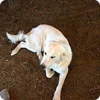 Adopt A Pet :: Jack LGD - Kyle, TX
