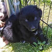 Adopt A Pet :: Morgan - Waller, TX