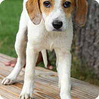 Adopt A Pet :: Olivia - Waldorf, MD