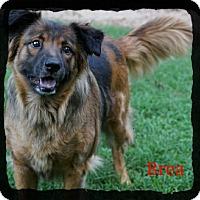 Adopt A Pet :: Brea - Old Saybrook, CT
