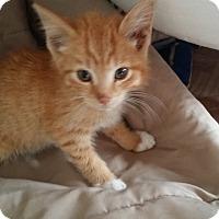 Adopt A Pet :: Alberto - Canton, OH