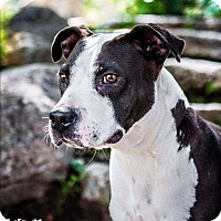 Adopt A Pet :: Jasmine - Broken Arrow, OK