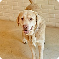 Adopt A Pet :: Tank - San Antonio, TX