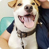 Adopt A Pet :: Jake - Hillsboro, IL