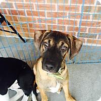 Adopt A Pet :: Anderson - waterbury, CT