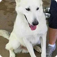 Adopt A Pet :: Odin - San Angelo, TX