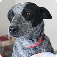Adopt A Pet :: JEZEBEL - Hurricane, UT