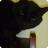 Adopt A Pet :: Blotter - Hamburg, NY