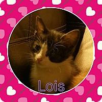 Adopt A Pet :: Lois - joliet, IL