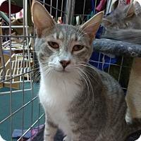 Adopt A Pet :: Chevy - Palo Cedro, CA