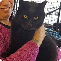 Adopt A Pet :: Murphy - Breinigsville, PA