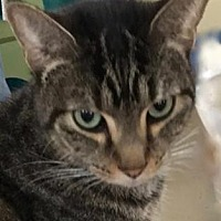 Adopt A Pet :: Mum - Bradenton, FL