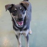 Adopt A Pet :: Cricket - San Diego, CA