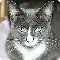 Adopt A Pet :: Sasha - Corinth, NY