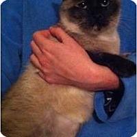Adopt A Pet :: Sherri - Simpsonville, SC