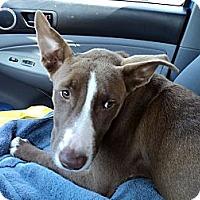 Adopt A Pet :: Zoe - Tallahassee, FL
