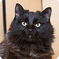 Adopt A Pet :: Bruno - Irvine, CA