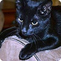 Adopt A Pet :: Taquito - Oviedo, FL