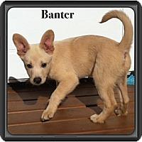 Adopt A Pet :: Banter - Saskatoon, SK