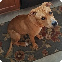 Adopt A Pet :: Ellie-Courtesy Post - North Olmsted, OH