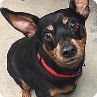 Adopt A Pet :: Max - Schererville, IN