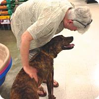 Adopt A Pet :: Vito - Ijamsville, MD